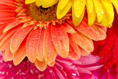 Wonderful flowers Stock Photography