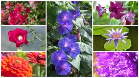 Wonderful flowers collage. Montage of diverse beautiful flowers stock video footage