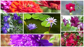 Wonderful flowers collage. Montage of diverse beautiful flowers stock footage