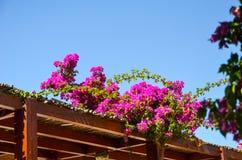 Wonderful flowers found in Greece Royalty Free Stock Photo