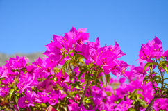 Wonderful flowers found in Greece Stock Photo