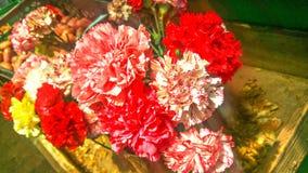 Wonderful Flowers From Madeira Island Stock Photography