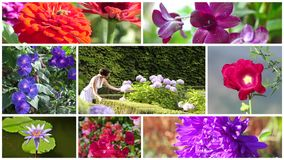 Wonderful flowers and romantic young woman collage. Montage including flowers and a beautiful young woman in a garden stock video