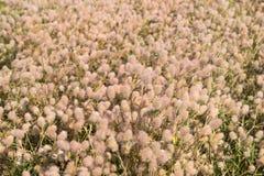 Wonderful Fluffy Flowers Stock Photo