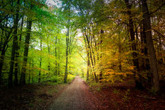 Wonderful forest in the fall in Poland Stock Photography