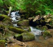 Wonderful forest waterfall. Ukrainian Carpathians royalty free stock photography