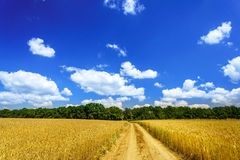 Wonderful golden wheat field. Stock Photo