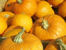Wonderful golden yellow orange pumpkins on a happy sunny day stock images
