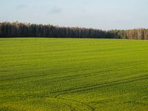 Wonderful green field and forest in the countryside on a sunny day.  stock photography