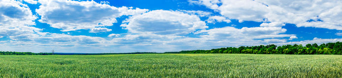 Wonderful green field by spring time. Royalty Free Stock Images