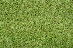 The wonderful green grass background. Stock Image