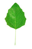 Wonderful green leaf Stock Photos
