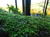 The wonderful on green moss and sunlit. The wonderfull view on moss in the front and in the background sunlit with landscape Royalty Free Stock Photo