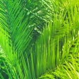 Enjoy a tropical dream. Wonderful green palm leaves - exotic vacation, botanical background and summer concept. Enjoy a tropical dream stock photo