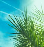 Enjoy a tropical dream. Wonderful green palm leaves - exotic vacation, botanical background and summer concept. Enjoy a tropical dream royalty free stock images