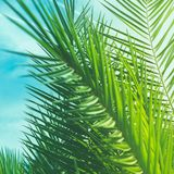 Enjoy a tropical dream. Wonderful green palm leaves - exotic vacation, botanical background and summer concept. Enjoy a tropical dream royalty free stock photos