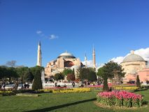Wonderful hagia sophia and tulips in istambul royalty free stock images