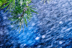 Wonderful heavy rain shower in the sunshine of springtime or summer enjoy the relaxing nature. The rain on vegetation background - Royalty Free Stock Images