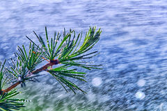 Wonderful heavy rain shower in the sunshine of springtime or summer enjoy the relaxing nature. The rain on vegetation background - Stock Photography