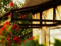 Wonderful house. House with flowers Stock Photography
