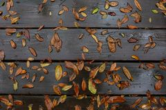 Wet deck with oak leaves royalty free stock image