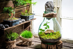 Wonderful jar with live forest as new life concept. On wooden table Royalty Free Stock Photos