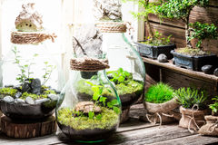 Wonderful jar with piece of green forest with self ecosystem. On wooden table Stock Image