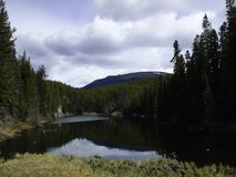 a wonderful lake inside the forest royalty free stock photography