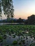 Wonderful lakeview. Nice lakeview of Hangzhou china Royalty Free Stock Photo