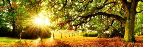 Wonderful landscape in autumn stock images
