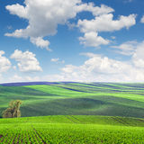 Wonderful Landscape  of fields in beautiful colorful and striped Stock Image