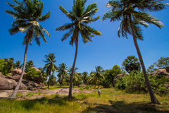 Wonderful landscape with a palm Stock Photography