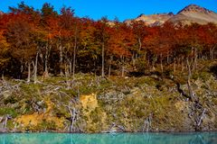Wonderful landscape of Patagonia`s Tierra del Fuego National Par. K in Autumn, Argentina, near Ushuaia, March stock photo