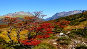 Wonderful landscape of Patagonia`s Tierra del Fuego National Par. K in Autumn, Argentina, near Ushuaia, March royalty free stock photos