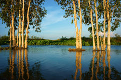 Wonderful landscape, Vietnam countryside, Mekong Delta Stock Photography