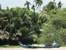 Wonderful landscape, Vietnam countryside, Mekong Delta. Wonderful, colorful landscape of Vietnam countryside at Mekong Delta, wooden boat floating on river, row Royalty Free Stock Image