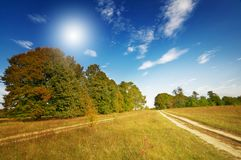 Wonderful  large oak trees and sky by autumn. Stock Photos