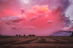 Wonderful late afternoon with a pink and purple sunset royalty free stock image