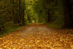 Wonderful leaf on small forest path in autumn Stock Photos