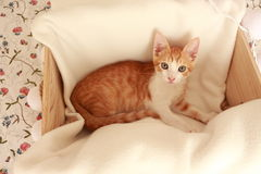 Wonderful little cat posing in front of the camera for several nice shots. Stock Images