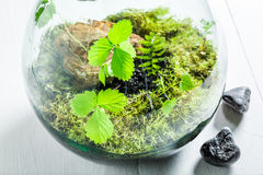 Wonderful live plants in a jar as new life concept. On white table Royalty Free Stock Photos