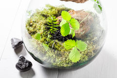Wonderful live plants in a jar Royalty Free Stock Images