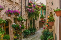 Wonderful Medieval Town In Umbria Region, Central Italy, During The Floral Competition. Romantic View Of Old Street In Spello Vill Stock Image