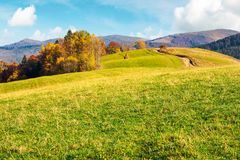 Wonderful mountain landscape in fall season. Forest with colorful foliage on the grassy hill. alpine ridge in the far distance. warm weather on a sunny day royalty free stock photo