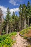 Wonderful mountain trail in the forest Stock Image