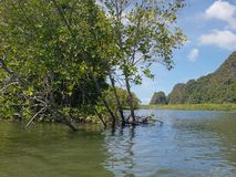 Wonderful mountainous landscape at a kayak trip into the mangrove forest in Ao Thalaine in Krabi in Thailand, Asia. Wonderful mountainous landscape at a kayak royalty free stock photos