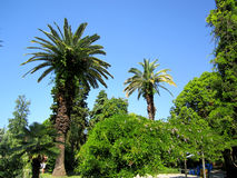 Wonderful nature. Palm trees and flowering shrubs on blue sky background Stock Image