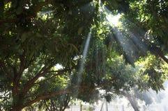 Wonderful nature scene in Chiangmai Stock Image