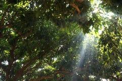 Wonderful nature scene in Chiangmai Stock Images
