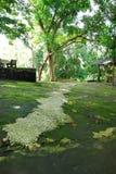 Wonderful nature scene in Hatyai Stock Images
